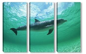 Модульная картина Dolphin105