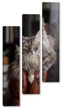 Модульная картина Кошка Дымка