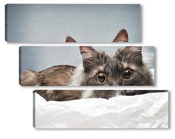 Модульная картина портрет удивленного кота