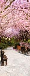 Наклейки Цветущая сакура