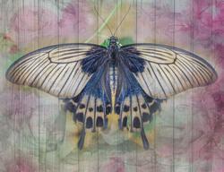 Наклейки Синяя бабочка