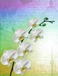 Наклейки Белые орхидеи