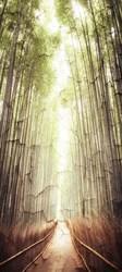 Наклейки Дорожка через лес