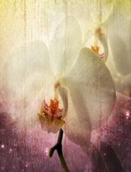 Наклейки Beautiful orchid