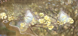 Наклейки Бабочки на ветках