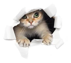 Наклейки Кот в холодильнике
