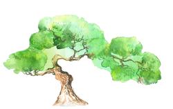 Наклейки Зеленое дерево Акварель