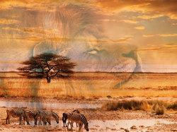 Наклейки Лев и савана