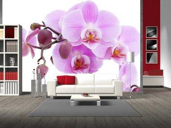 Фотообои Фиолетовая орхидея